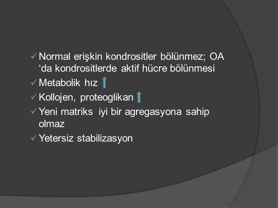 Normal erişkin kondrositler bölünmez; OA 'da kondrositlerde aktif hücre bölünmesi