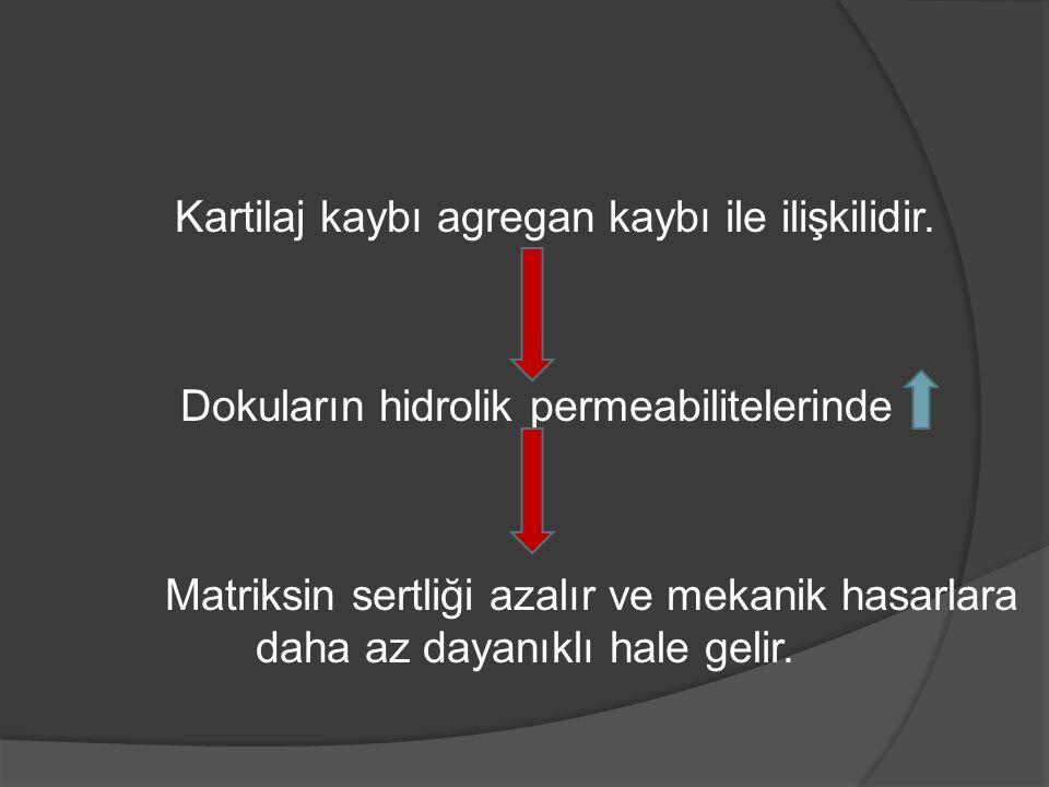 Kartilaj kaybı agregan kaybı ile ilişkilidir.