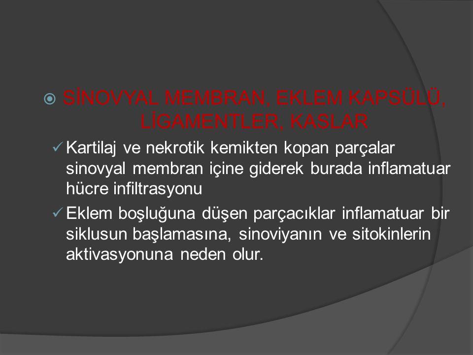 SİNOVYAL MEMBRAN, EKLEM KAPSÜLÜ, LİGAMENTLER, KASLAR
