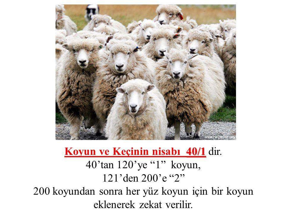 Koyun ve Keçinin nisabı 40/1 dir.