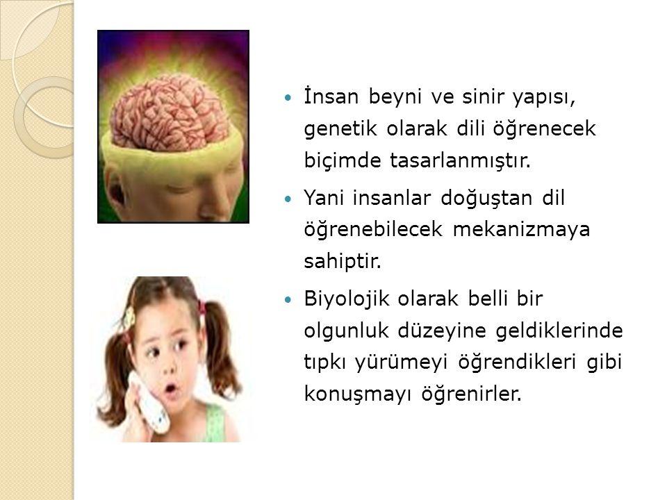 İnsan beyni ve sinir yapısı, genetik olarak dili öğrenecek biçimde tasarlanmıştır.