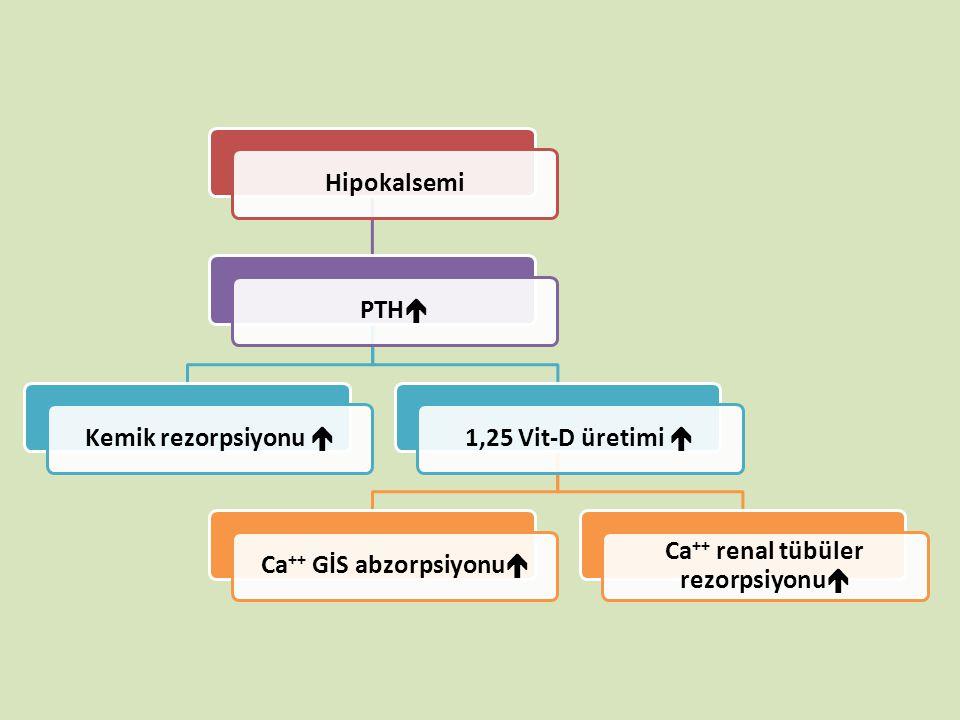 Ca++ GİS abzorpsiyonu Ca++ renal tübüler rezorpsiyonu