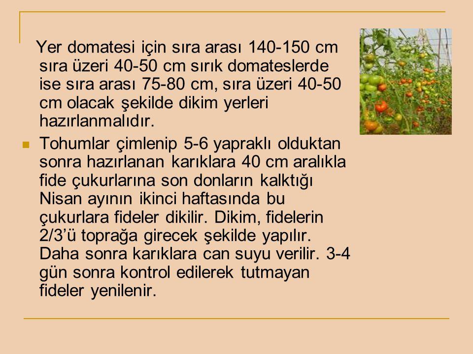 Yer domatesi için sıra arası 140-150 cm sıra üzeri 40-50 cm sırık domateslerde ise sıra arası 75-80 cm, sıra üzeri 40-50 cm olacak şekilde dikim yerleri hazırlanmalıdır.