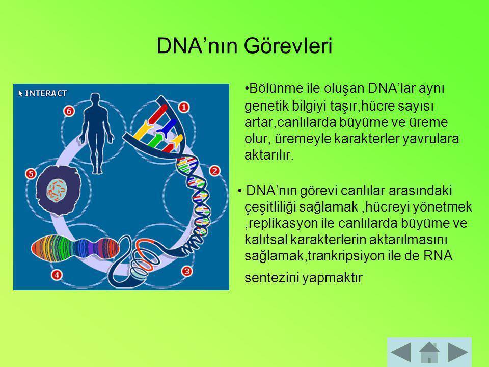 DNA'nın Görevleri