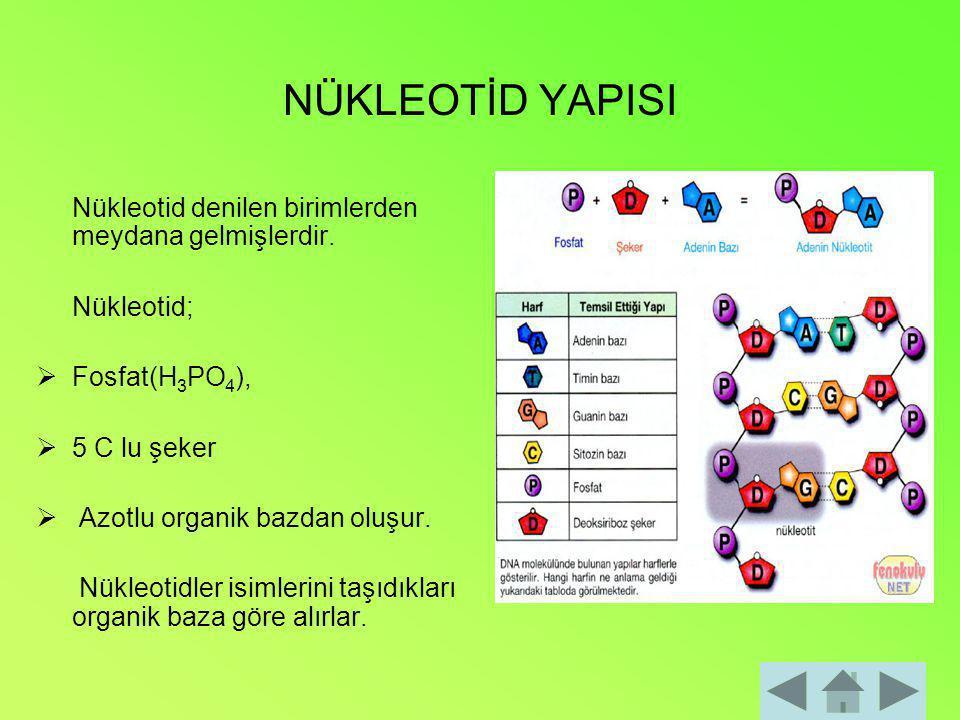 NÜKLEOTİD YAPISI Nükleotid denilen birimlerden meydana gelmişlerdir.