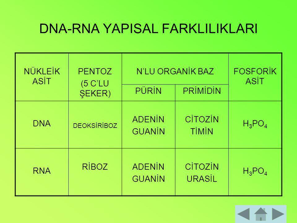 DNA-RNA YAPISAL FARKLILIKLARI