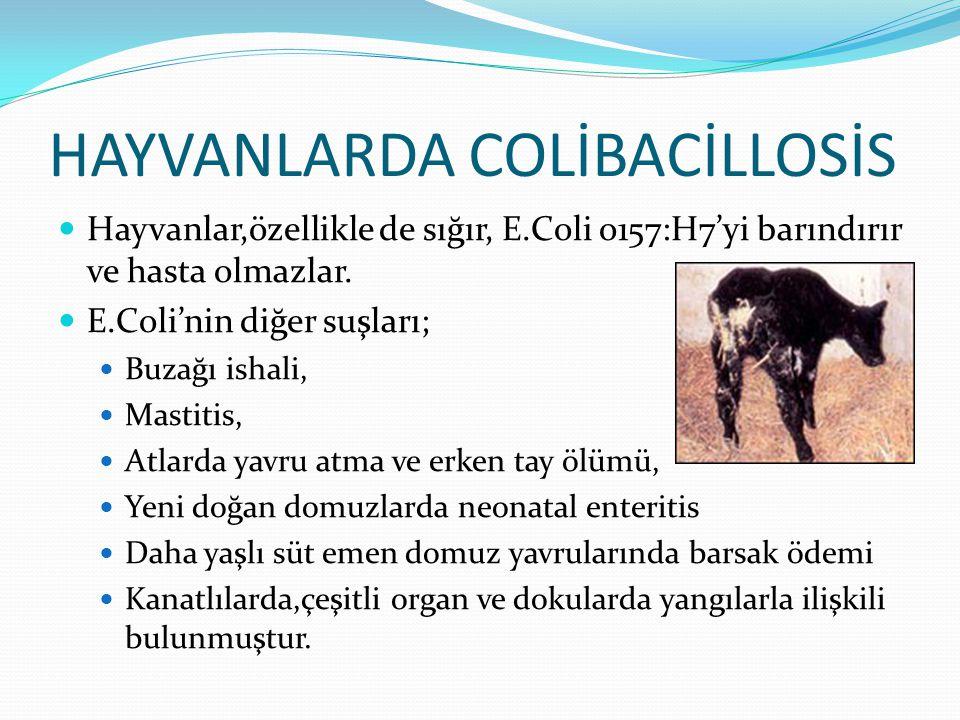 HAYVANLARDA COLİBACİLLOSİS