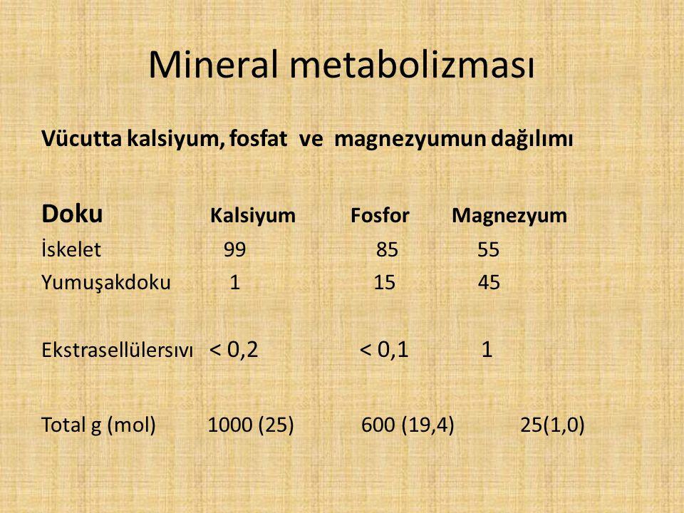 Mineral metabolizması