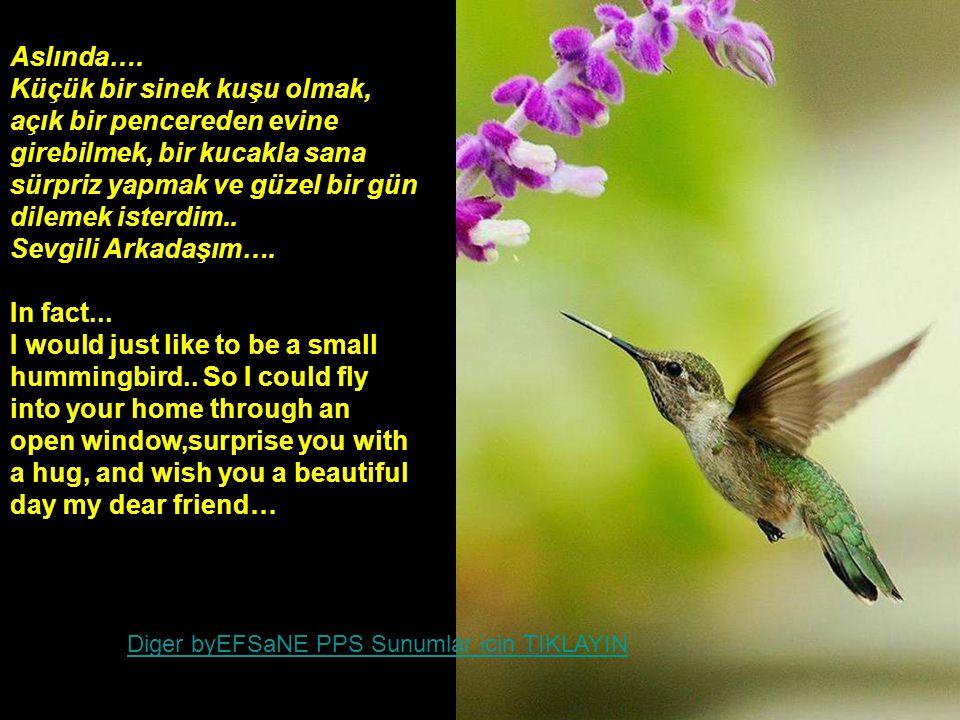 Küçük bir sinek kuşu olmak, açık bir pencereden evine