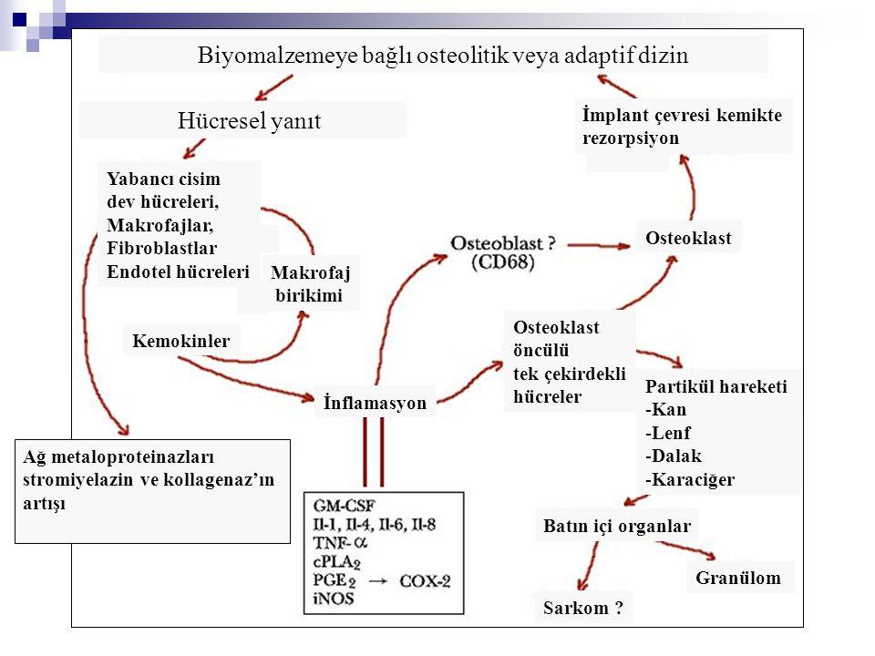 Biyomalzemeye bağlı osteolitik veya adaptif dizin