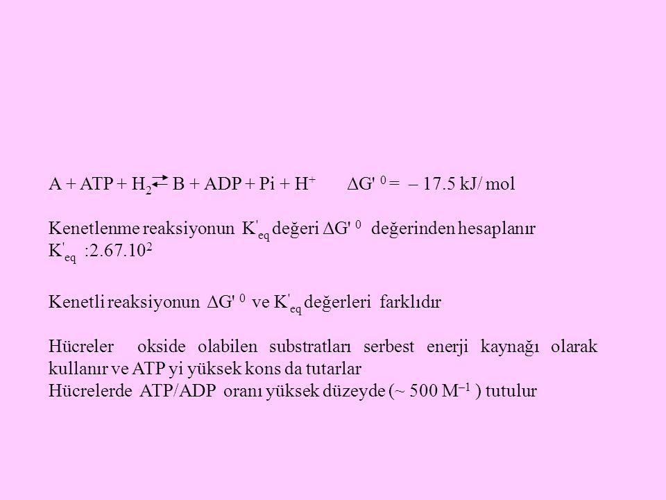 A + ATP + H2 B + ADP + Pi + H+ ΔG 0 = – 17.5 kJ/ mol