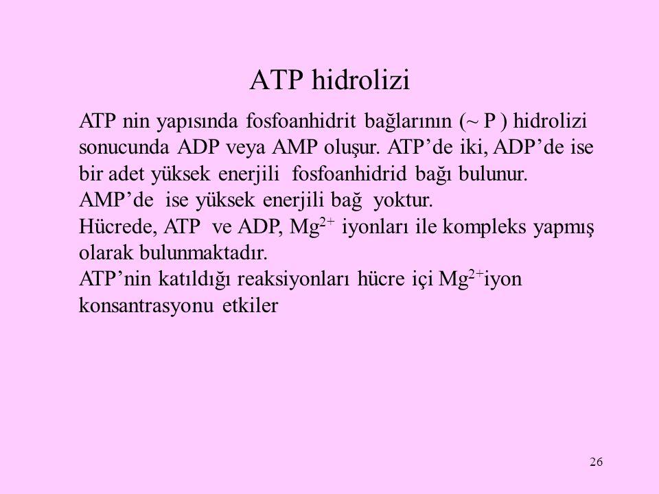 ATP hidrolizi
