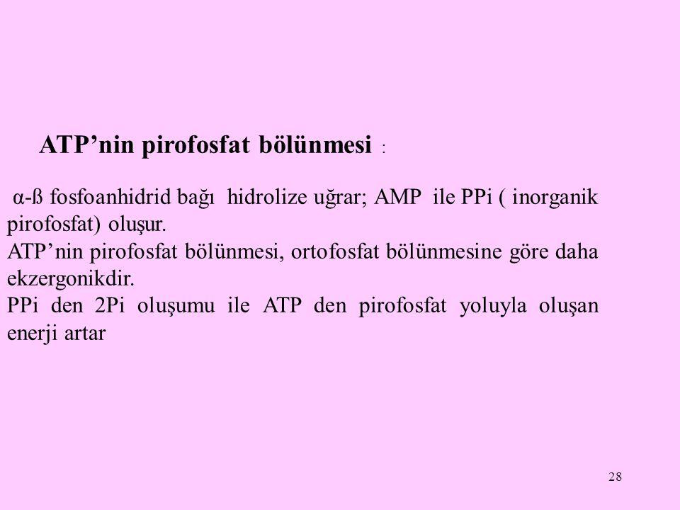 ATP'nin pirofosfat bölünmesi :
