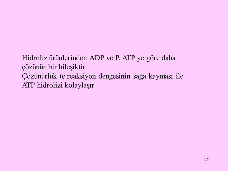 Hidroliz ürünlerinden ADP ve P, ATP ye göre daha çözünür bir bileşiktir