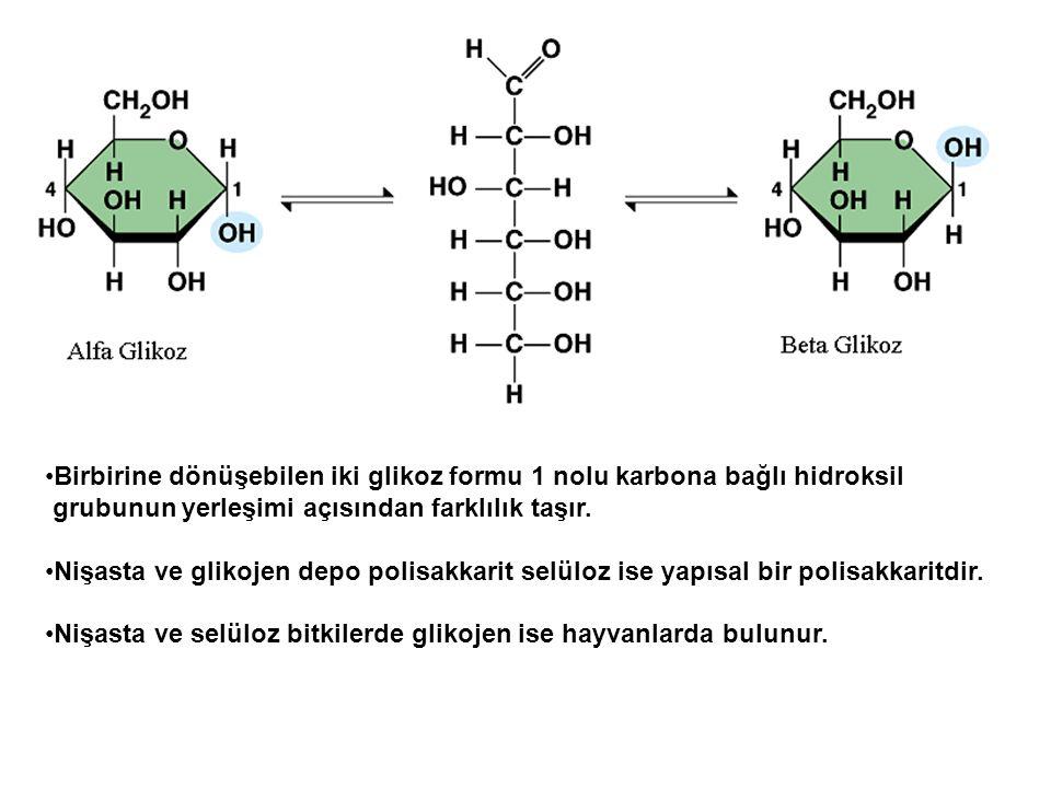 Birbirine dönüşebilen iki glikoz formu 1 nolu karbona bağlı hidroksil