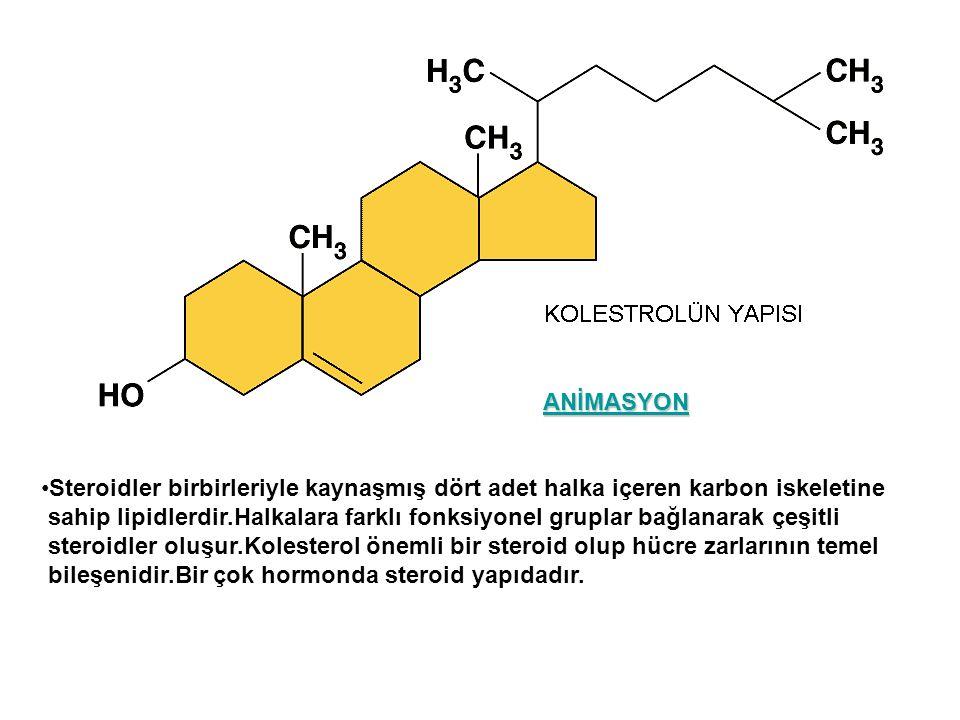 ANİMASYON Steroidler birbirleriyle kaynaşmış dört adet halka içeren karbon iskeletine.