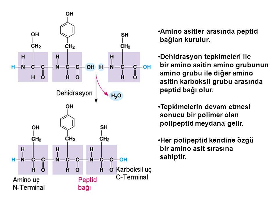 Amino asitler arasında peptid
