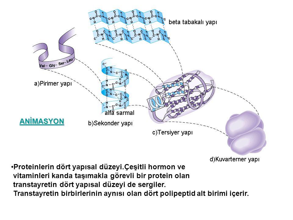 ANİMASYON Proteinlerin dört yapısal düzeyi.Çeşitli hormon ve. vitaminleri kanda taşımakla görevli bir protein olan.