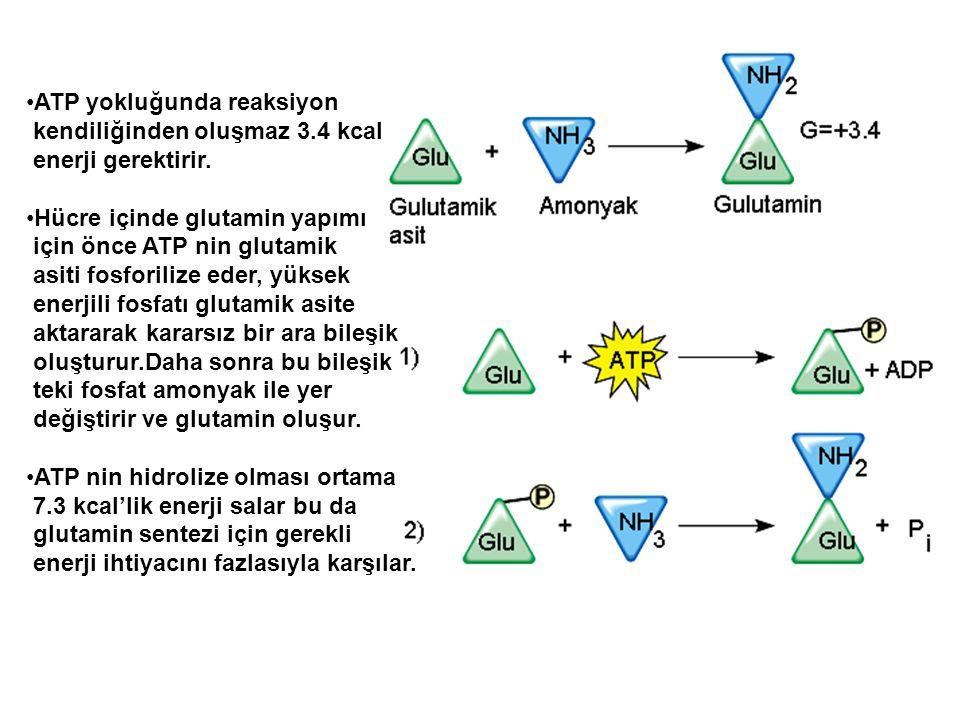 ATP yokluğunda reaksiyon