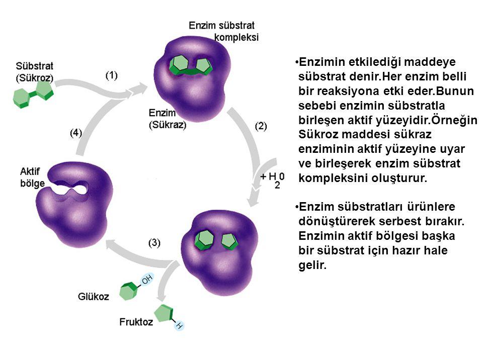 Enzimin etkilediği maddeye