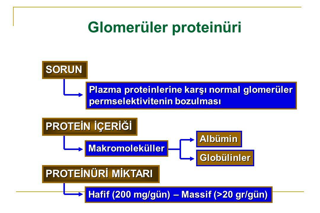 Glomerüler proteinüri