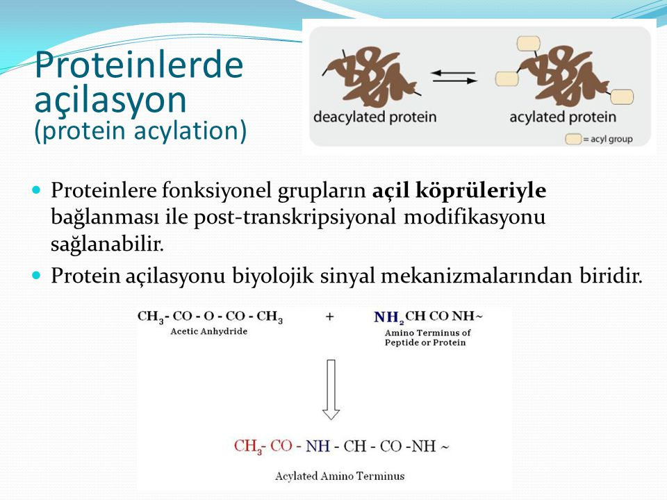 Proteinlerde açilasyon (protein acylation)