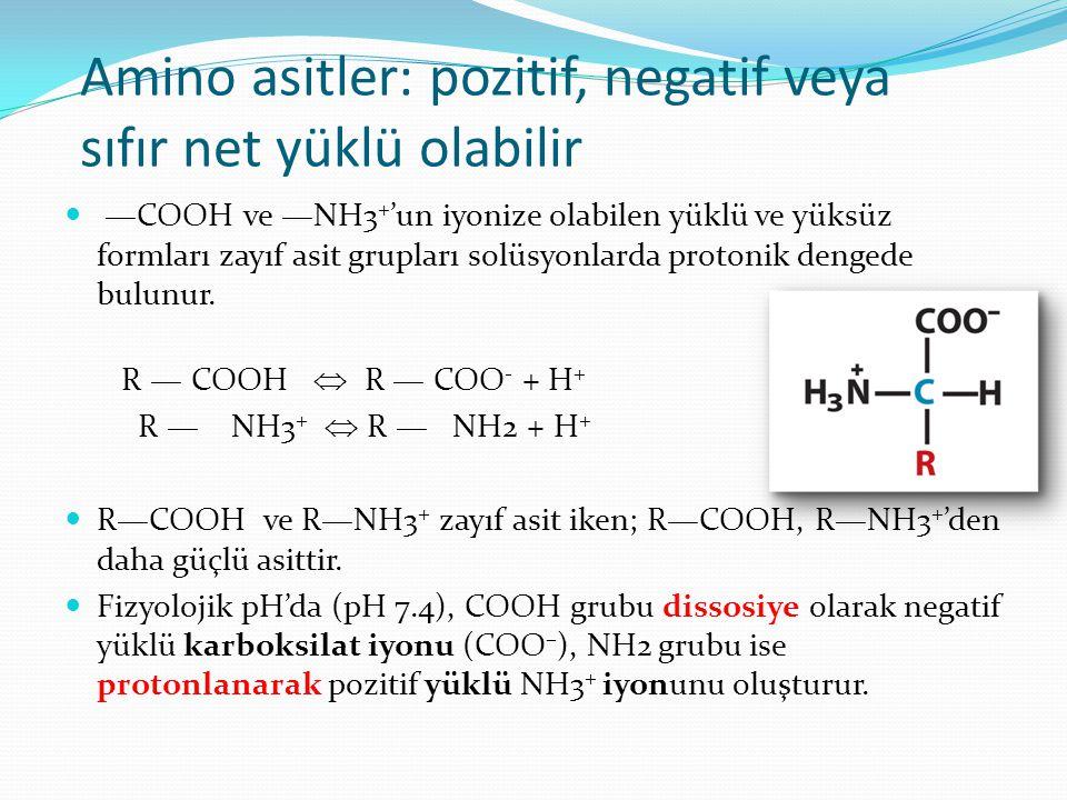 Amino asitler: pozitif, negatif veya sıfır net yüklü olabilir