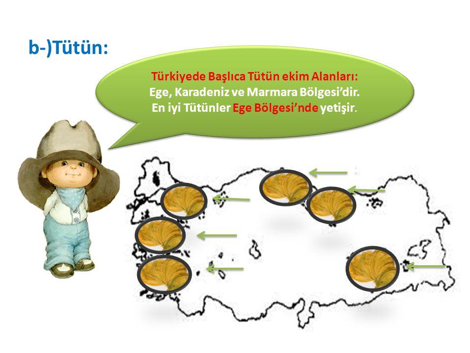 b-)Tütün: Türkiyede Başlıca Tütün ekim Alanları: Ege, Karadeniz ve Marmara Bölgesi'dir.