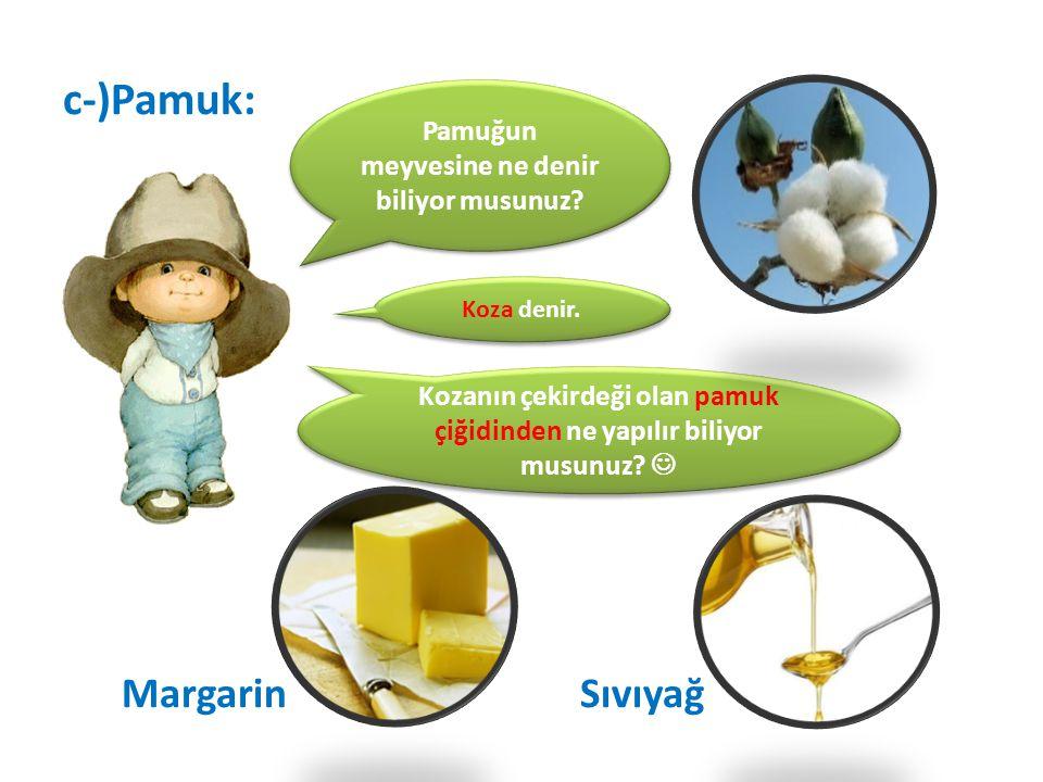 c-)Pamuk: Margarin Sıvıyağ Pamuğun meyvesine ne denir biliyor musunuz