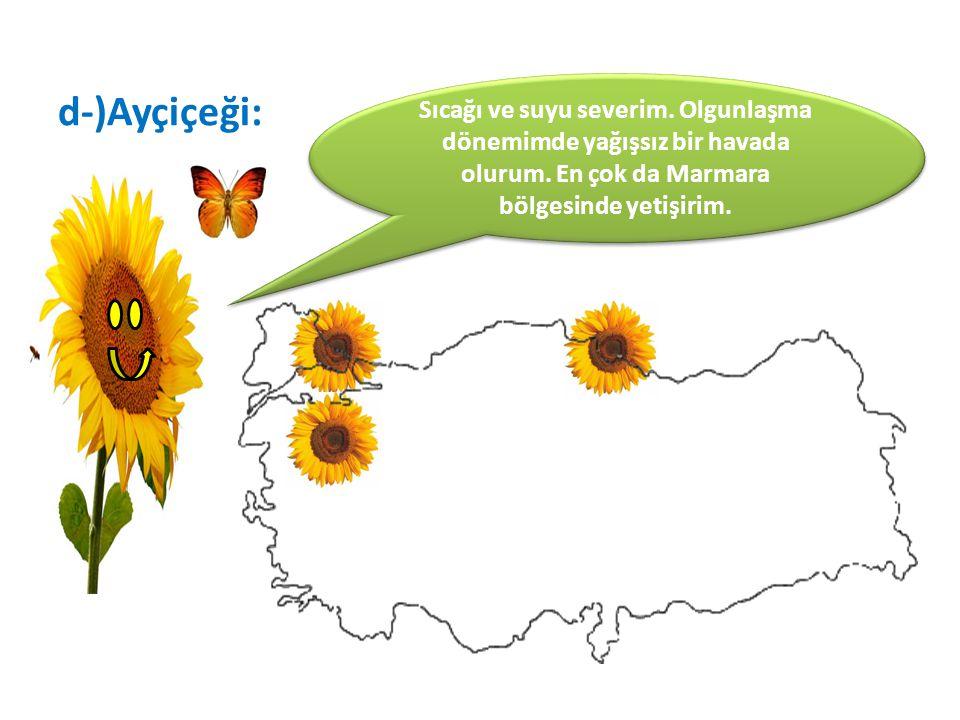 Sıcağı ve suyu severim. Olgunlaşma dönemimde yağışsız bir havada olurum. En çok da Marmara bölgesinde yetişirim.