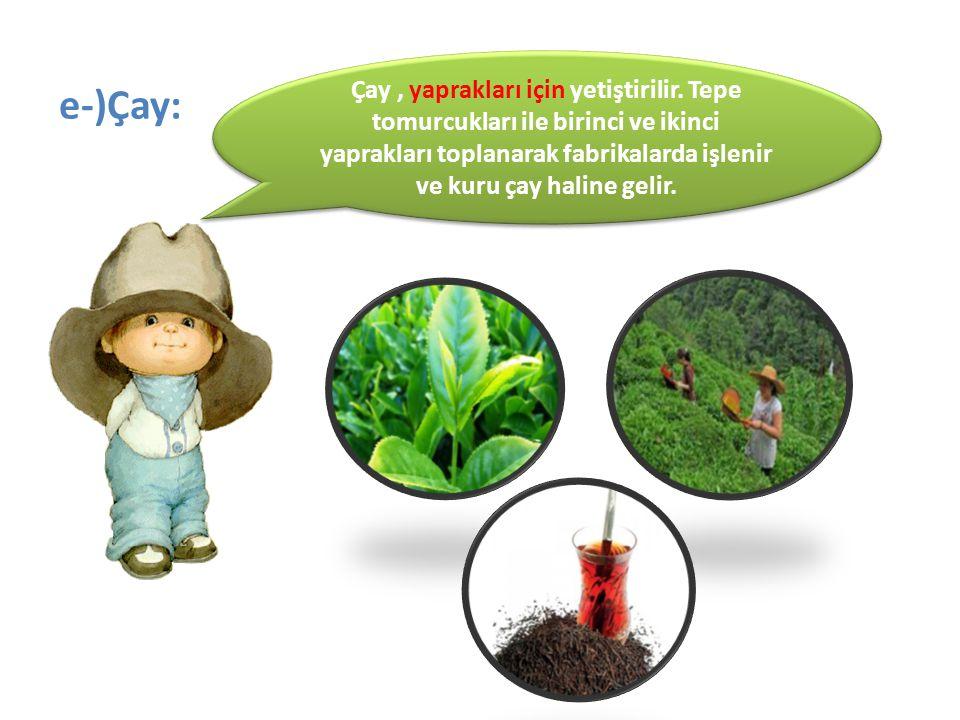Çay , yaprakları için yetiştirilir