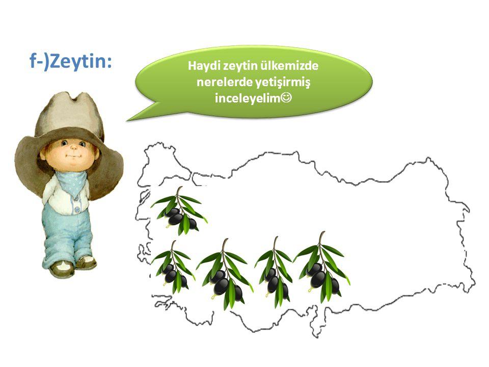 Haydi zeytin ülkemizde nerelerde yetişirmiş inceleyelim