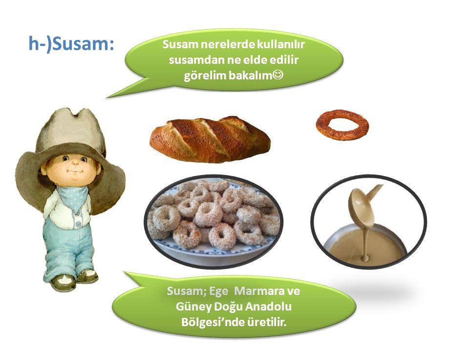 h-)Susam: Susam nerelerde kullanılır susamdan ne elde edilir görelim bakalım Susam; Ege Marmara ve Güney Doğu Anadolu Bölgesi'nde üretilir.
