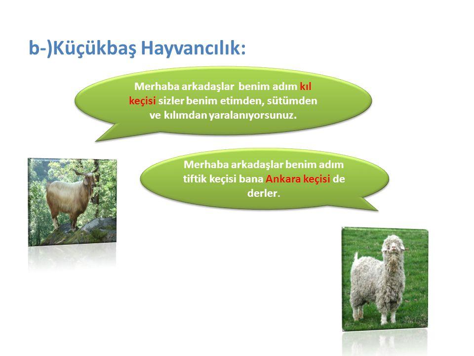 b-)Küçükbaş Hayvancılık: