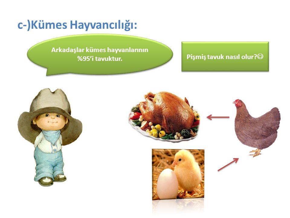 c-)Kümes Hayvancılığı: