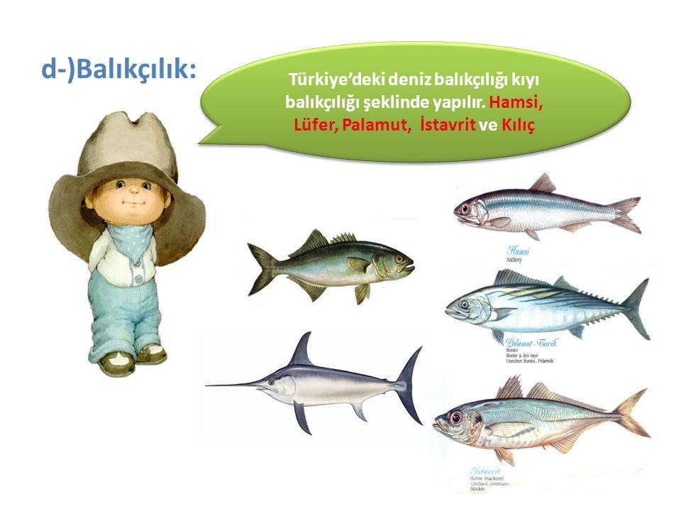 Türkiye'deki deniz balıkçılığı kıyı balıkçılığı şeklinde yapılır