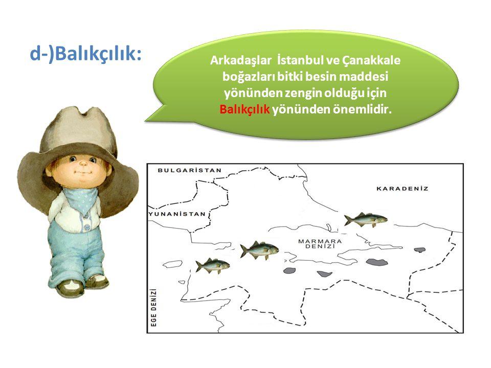 Arkadaşlar İstanbul ve Çanakkale boğazları bitki besin maddesi yönünden zengin olduğu için Balıkçılık yönünden önemlidir.