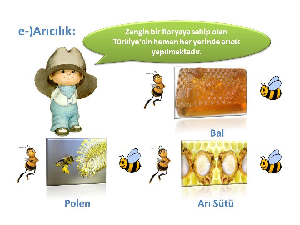 Bal e-)Arıcılık: Polen Arı Sütü