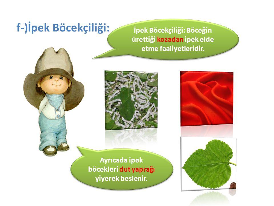Ayrıcada ipek böcekleri dut yaprağı yiyerek beslenir.