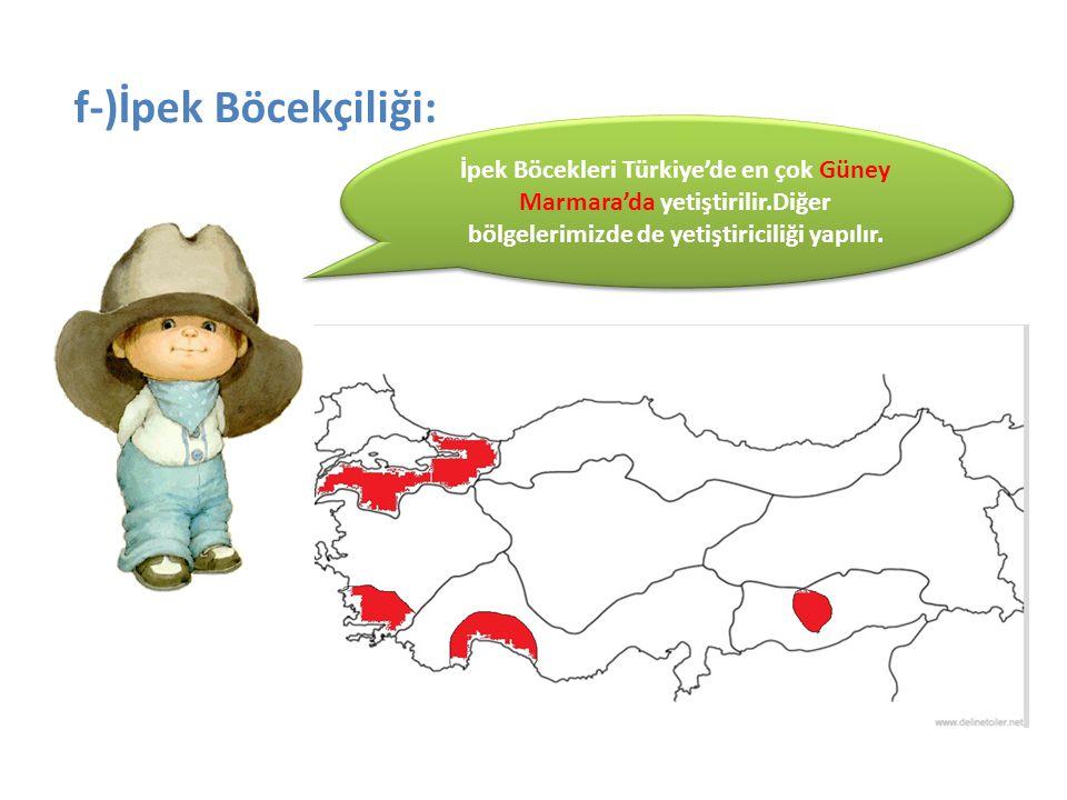 f-)İpek Böcekçiliği: İpek Böcekleri Türkiye'de en çok Güney Marmara'da yetiştirilir.Diğer bölgelerimizde de yetiştiriciliği yapılır.