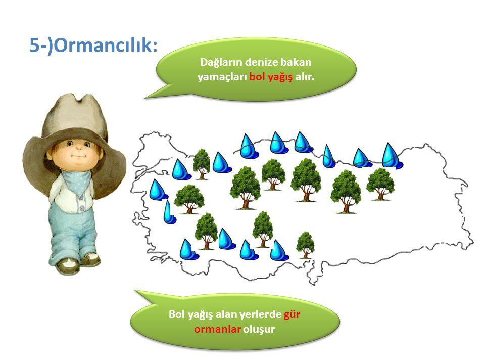 5-)Ormancılık: Dağların denize bakan yamaçları bol yağış alır.