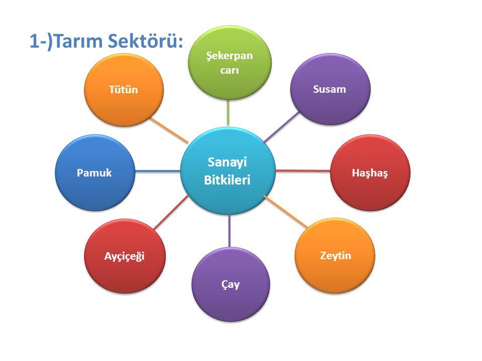 1-)Tarım Sektörü: Sanayi Bitkileri Şekerpancarı Tütün Susam Pamuk