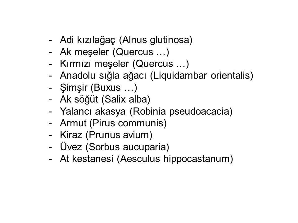Adi kızılağaç (Alnus glutinosa)