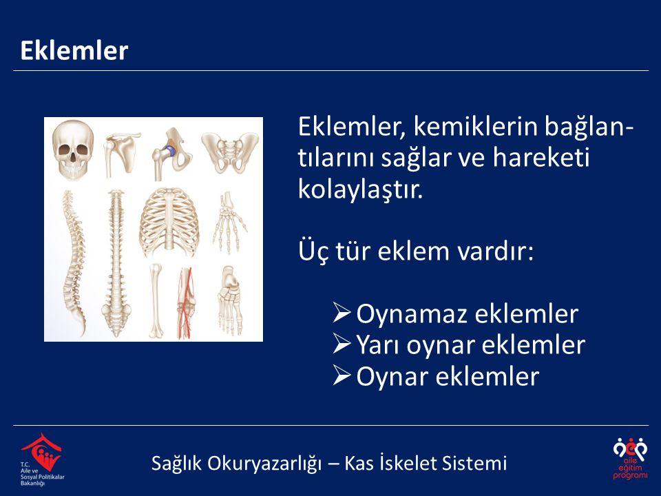 Eklemler, kemiklerin bağlan- tılarını sağlar ve hareketi kolaylaştır.