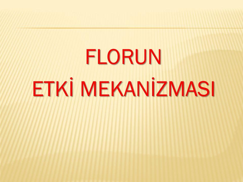 FLORUN ETKİ MEKANİZMASI