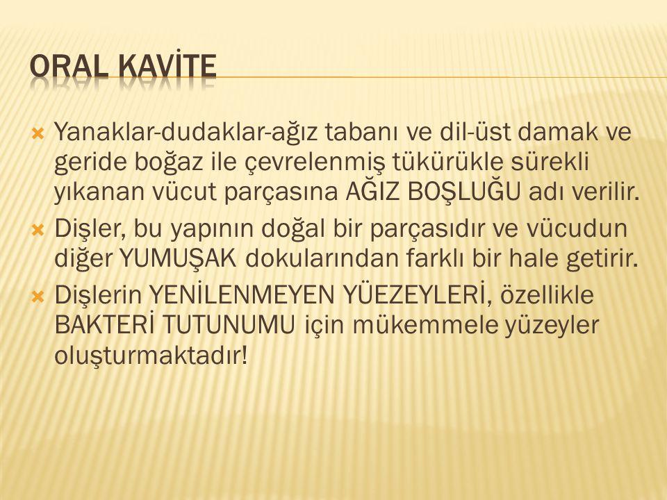 ORAL KAVİTE