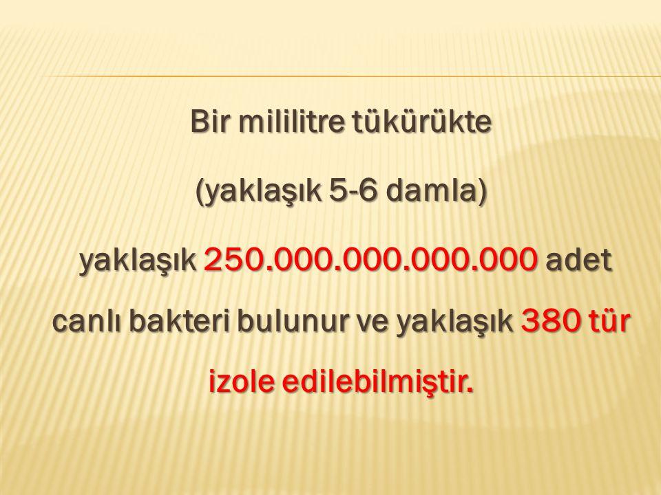 Bir mililitre tükürükte (yaklaşık 5-6 damla) yaklaşık 250. 000. 000