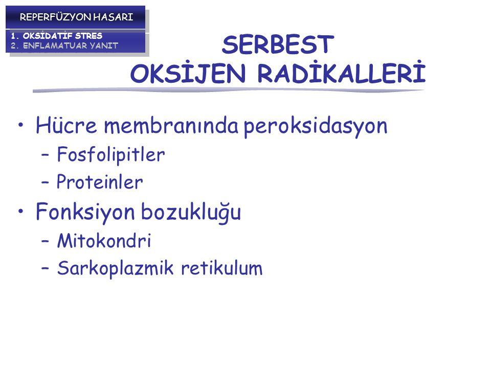 SERBEST OKSİJEN RADİKALLERİ