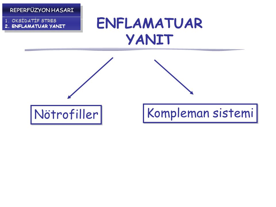 ENFLAMATUAR YANIT Kompleman sistemi Nötrofiller REPERFÜZYON HASARI