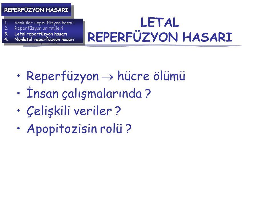 LETAL REPERFÜZYON HASARI